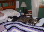 Sassy and Katchoo on the bed