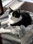 Sassy on a comforter