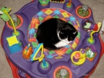 Sassy in the Exersaucer