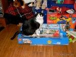 Sassy sitting on top of Christmas presents