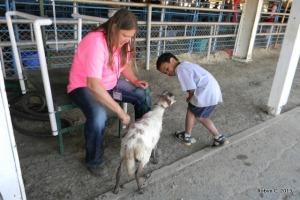 Jackson meets a katahdin sheep