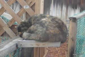 December 2007: Jinxy sleeping outside