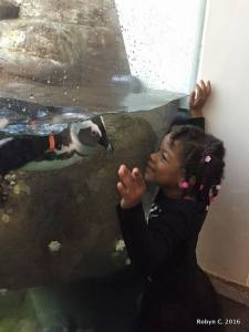 Cassie meets a penguin (Cal Academy)