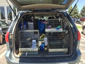 Rabbit cages and luggage in van