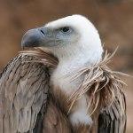 blog_vulture